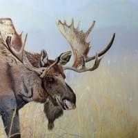 """Moose on the Prairie"" - Sold"
