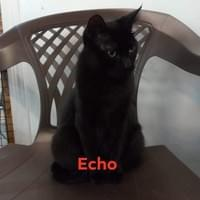 Echo 3 yr female