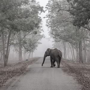 """Dreaming of Elephants"", Nagarhole National Park, India"