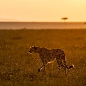 """Sunrise in the Mara"", Masai Mara National Park, Kenya"