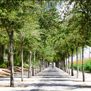 The university walkway lined with greenery just off the main street. (Maryland) Las Vegas, Nevada August 3, 2018. Photo by Haeli Paris
