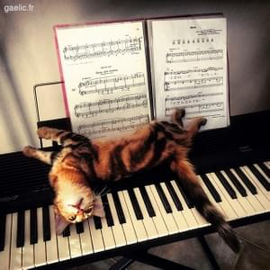 2016-07-26 Sorry i could not resist the LOLcat temptation #cat #cats #catsofinstagram #piano #iphone