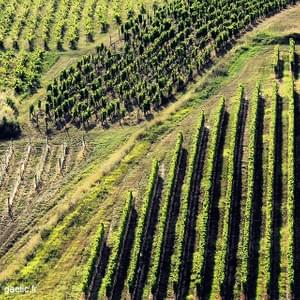 2016-08-08 #France #Gironde Vignes de Sainte Croix du Mont #travel #trip #roadtrip #landscape #paysage #vin #vineyard #wanderlust #summertime #geometry