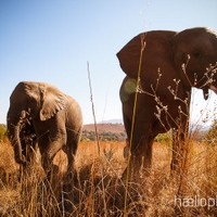 haelio photo – Elephant walk in South Africa