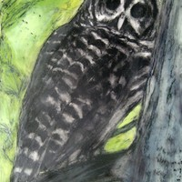Owl Who Visits