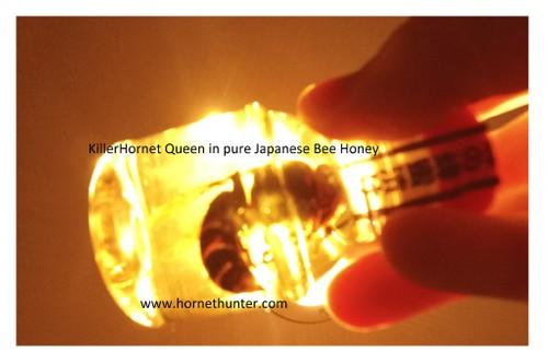 KillerHornet Queen Honey