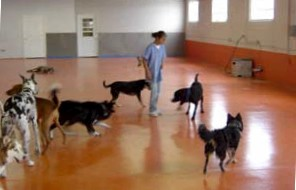 Trained staff watches dogs