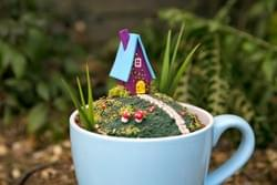 Giant tea cup fairy garden