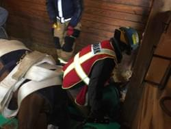 Horse needed cooperation from Little Fork Large Animal Technical Rescue to get out of the barn and back on his feet.