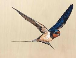 Swooping Swallow 3 - Original Available - €350