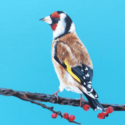 Little Finch - Original Available - €400