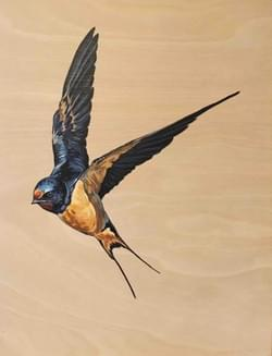 Swooping Swallow 2 - Original Sold