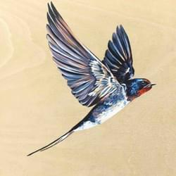 Swooping Swallow 1 - Original Available - €300