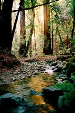 Muir Woods creek and sun reflection, Muir Woods  National Monument by Alden Olmsted