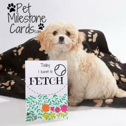 Pet Milestone Cards - Puppy Milestone Cards