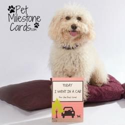 Puppy-Milestone-cards