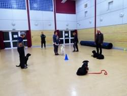 Dog class in Wymondham