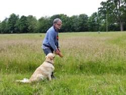 Gun-dog training wymondham