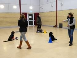 Advanced dog class wymondham