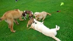 Puppy socialisation wymondham