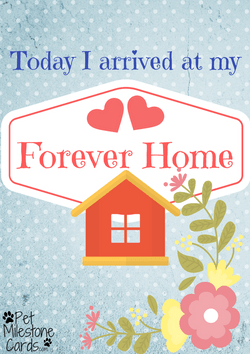 Forever-home-puppy-card