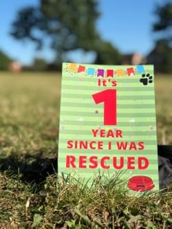 Rescue Dog Milestone cards