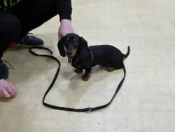 Puppy class south norfolk