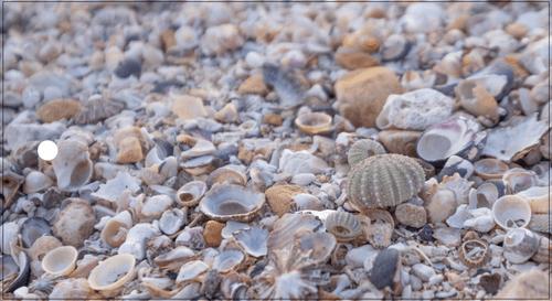 Shells- Gift Tag