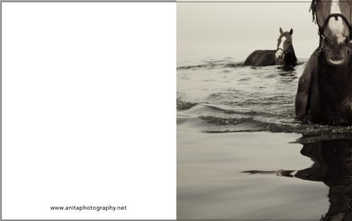 Water horses 1