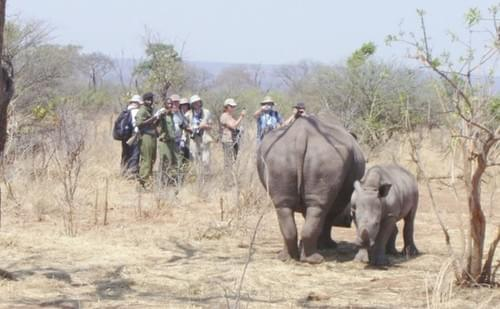 Game & Rhino Walk