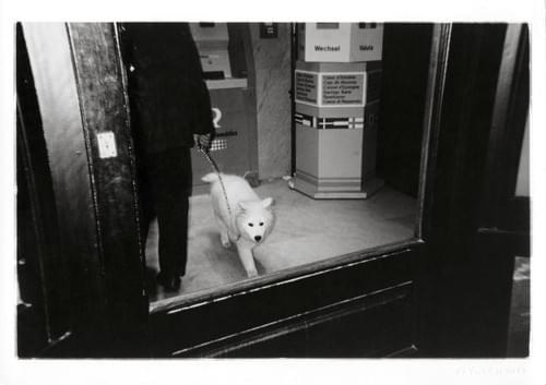 Visión Animal, 1996