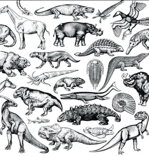 "12"" Skratch Fossils Scratch Record"