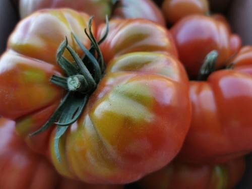 """Tomate """"San Marzano Gigante"""""""
