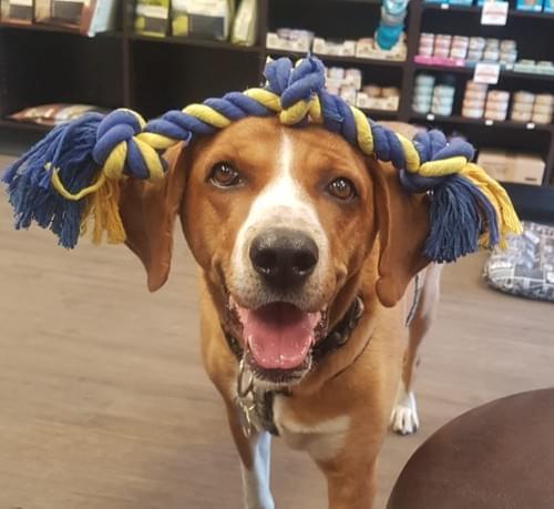 Plush Medium and Large Dog Toy Variety