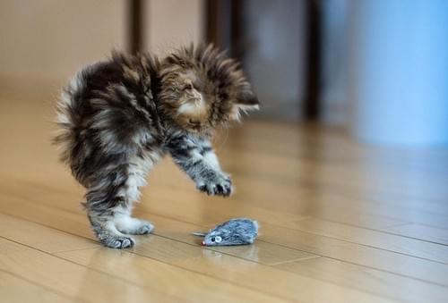 Bulk Cat Toys