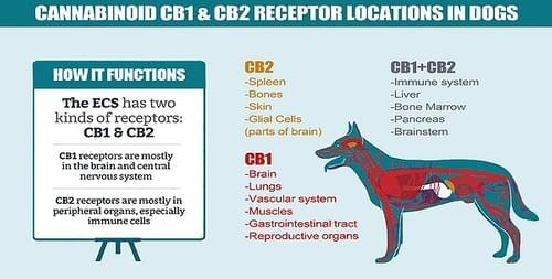 Hemp Terpenes For Dogs and Cats  Variety