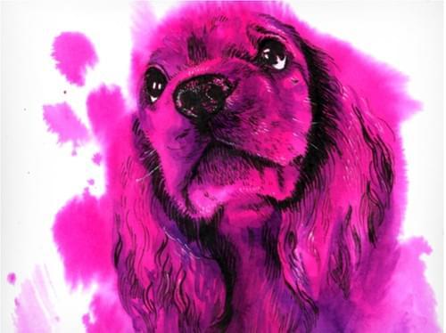 Cocker Spaniel Pup (Full Guidebook)
