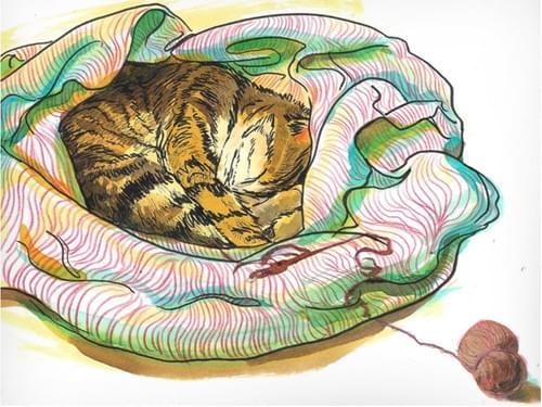 Snuggly Blanket Cat (Full Guidebook)