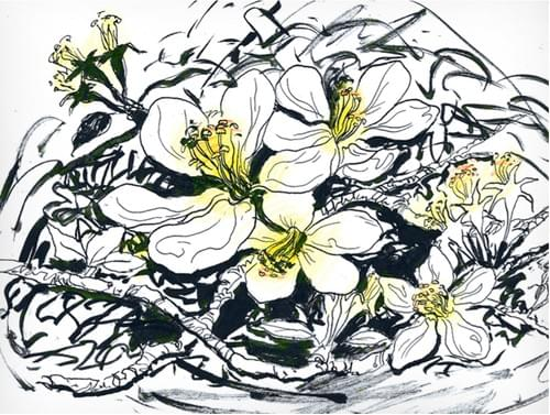 Apple Blossom (Full Guidebook)