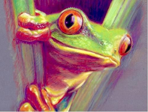 Cheeky Tree Frog (Full Guidebook)