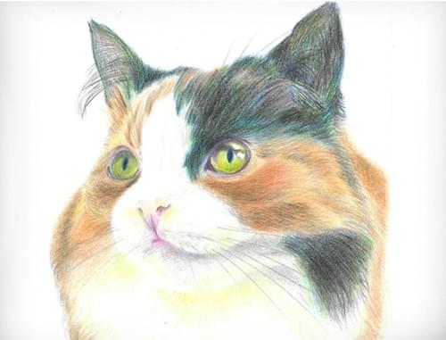 Cat Pet Portrait (Full Guidebook)
