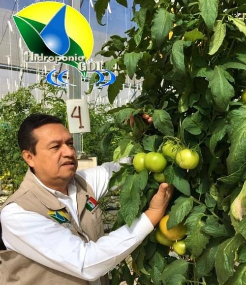 Taller de Tomate en Hidroponia