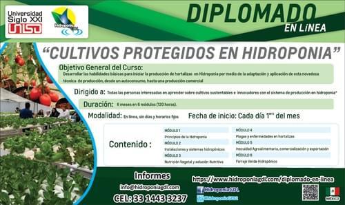 Diplomado en línea de cultivos protegidos en Hidroponia