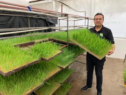 Taller de Forraje Verde Hidropónico En Línea