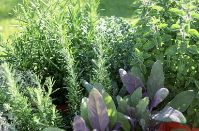 Autumn Checklist for the Fall Herb Gardens Demo/Class Sept. 26th