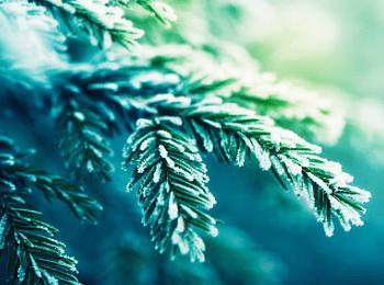 Make It - Take It, All Natural Holiday Room Spray (8 oz.)  November 19th
