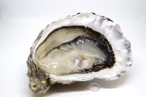 Alizée N°3 (huîtres spéciales)