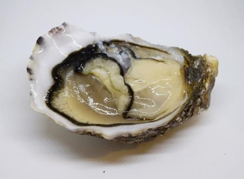 Alizée N°2 (huîtres spéciales)