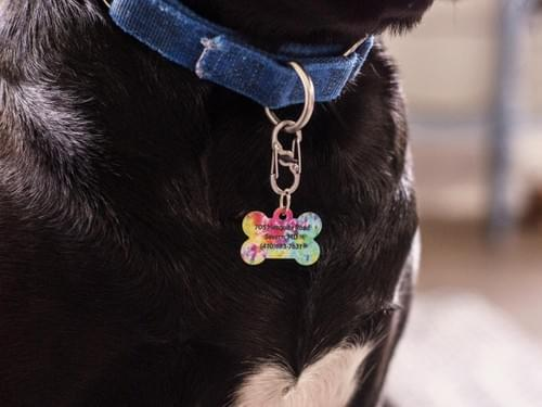 Pet Dog Tags