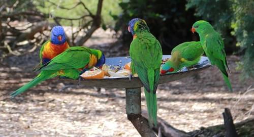 鳥類羽毛基因性別鑑定買20送7超值優惠包B~~~免抽血,安全無痛